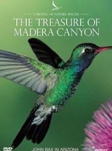 Profiles of nature - the treasure of madera canyon