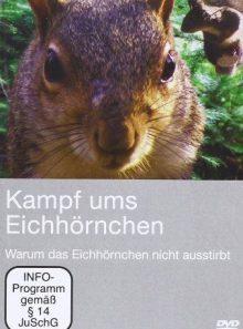 Kampf ums eichhörnchen